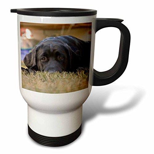 3dRose Labrador Retriever Puppy Dog-NA02 RBR0015-Rick A. Brown Stainless Steel Travel Mug, 14-Ounce by 3dRose