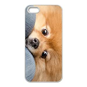 Customized case Of Pomeranian Hard Case for iPhone 5,5S by ruishername