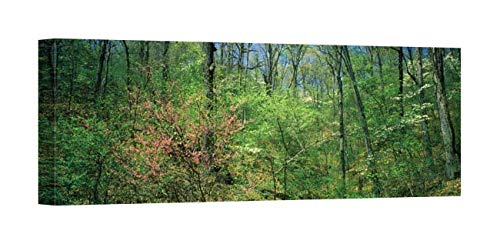 Easy Art Prints Panoramic Images's 'Forest, Trail of Tears, Shawnee National Forest, Illinois, USA' Premium Canvas Art 24 x 8