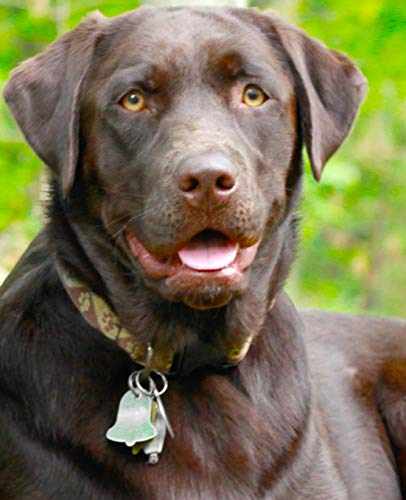 Used, School Composition Book Dogs Puppies Retrievers Chocolate for sale  Delivered anywhere in Canada