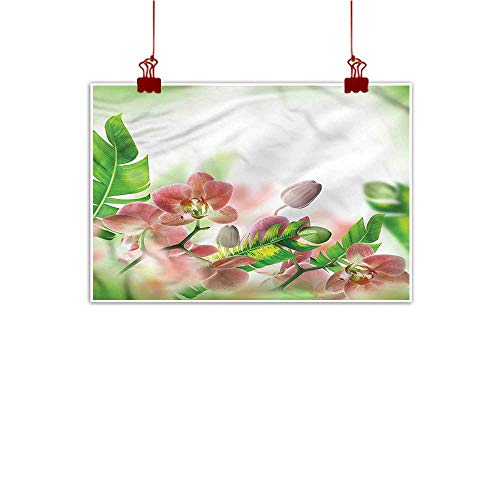 Mangooly Outdoor Nature Inspiration Poster Wilderness Tropical,Orchids Blossoms Leaves 28