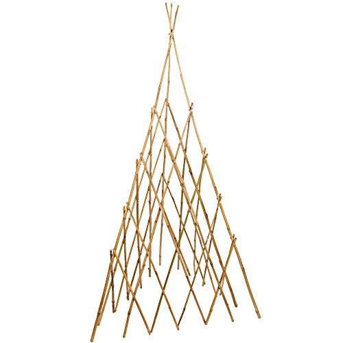 (Bonide Products TP60 Bamboo Teepee Trellis for Climbing Plants, 60 Inches (When Open), 1 Trellis)