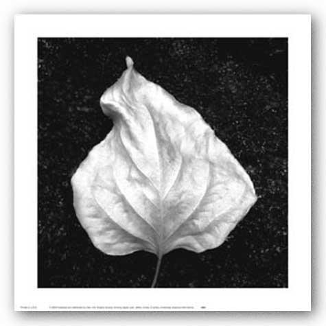 Glowing Aspen Leaf by Jeffrey Conley 11