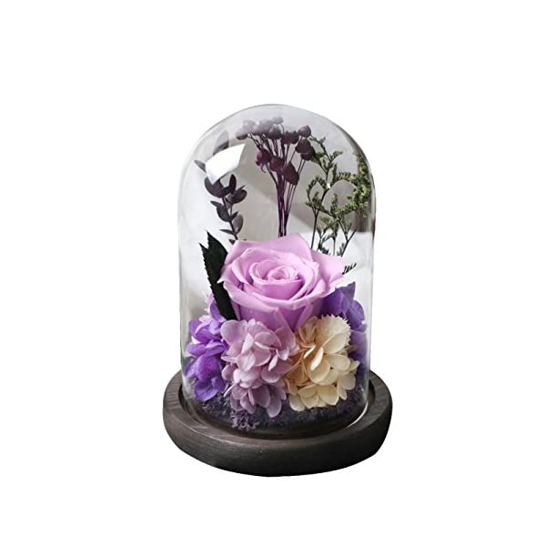 Amoleya-49-Inch-Handmade-Preserved-Rose-Enchanted-Rose-That-Lasts-in-Glass-DomeViolet