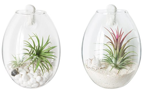 Mkono 2 Pack Wall Hanging Planter Terrarium Bubble Glass Flower Pot Air Plant Holder by Mkono
