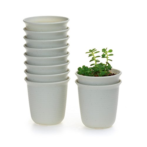 T4U 3 Inch Plastic Round Sucuulent Plant Pot/Cactus Plant Pot Flower Pot/Container/Planter Package 1 Pack of 10