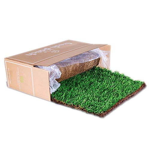 Fresh Patch XL - Real Grass Pee and Potty Training Pad for Large Dogs and Multi-Dog Households - Indoor and Outdoor Use - 48 Inches x 24 Inches (Dogs For Potty Patio)