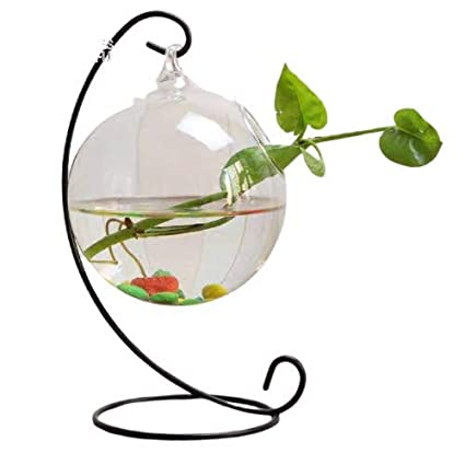 Hanging Bowl With Stand Creative Small Table Glass Fish Vase Aquarium For Fishes Money Plant Bush Plant Home Decor Central Fish Aquarium Round Amazon In Pet Supplies