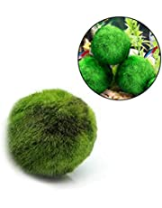 AUOKER Marimo Moss Ball, Unique Decor for Aquariums and Glass Jar Terrarium Kits, Bright, and Fluffy, Low Maintenance, Aesthetically Beautiful & Create Healthy Environment - Eco-Friendly