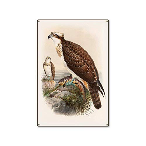 Ohuu 8×12 Eagle Metal Wall Sign Retro Plaque Poster Vintage Iron Sheet Painting Decoration Hanging Artwork Crafts Cafe Beer Bar