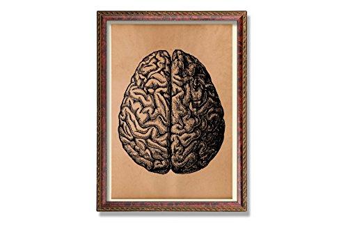 Vintage Brain art print Anatomical poster Anatomy gift Medical decoration
