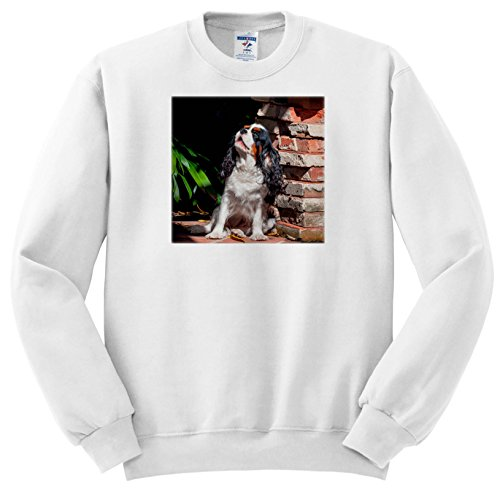 Danita Delimont - Dogs - Cavalier King Charles Spaniel Puppy howing - Sweatshirts - Youth Sweatshirt Med(10-12) ()