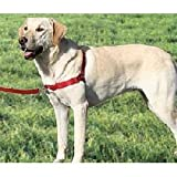 Easy Walk Dog Harness Size: Small / Medium (9.5″ H x 5.25″ W x 1.75″ D), Color: Red / Cranberry, My Pet Supplies