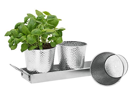 Windowsill Herb Pots by Saratoga Home - Set of 3