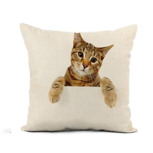 Awowee Flax Throw Pillow Cover Kitten Bengal Cat Looking Over Sign Behind Animal Blank 18x18 Inches Pillowcase Home Decor Square Cotton Linen Pillow Case Cushion Cover