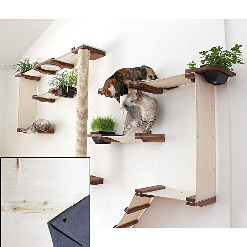 Wall-Mounted  CatastrophiCreations Cat Mod Gardens Set Review