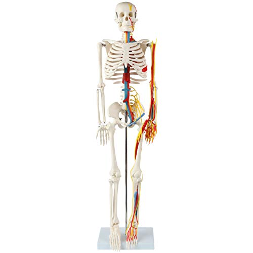 Anatomy Lab 33