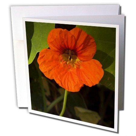 Danita Delimont - Flowers - Africa, Malawi, Zomba, Flower at Hotel Sunbird Ku Chawe-AF25 RSW0130 - Roy Schwarz - 6 Greeting Cards with envelopes (gc_72179_1)