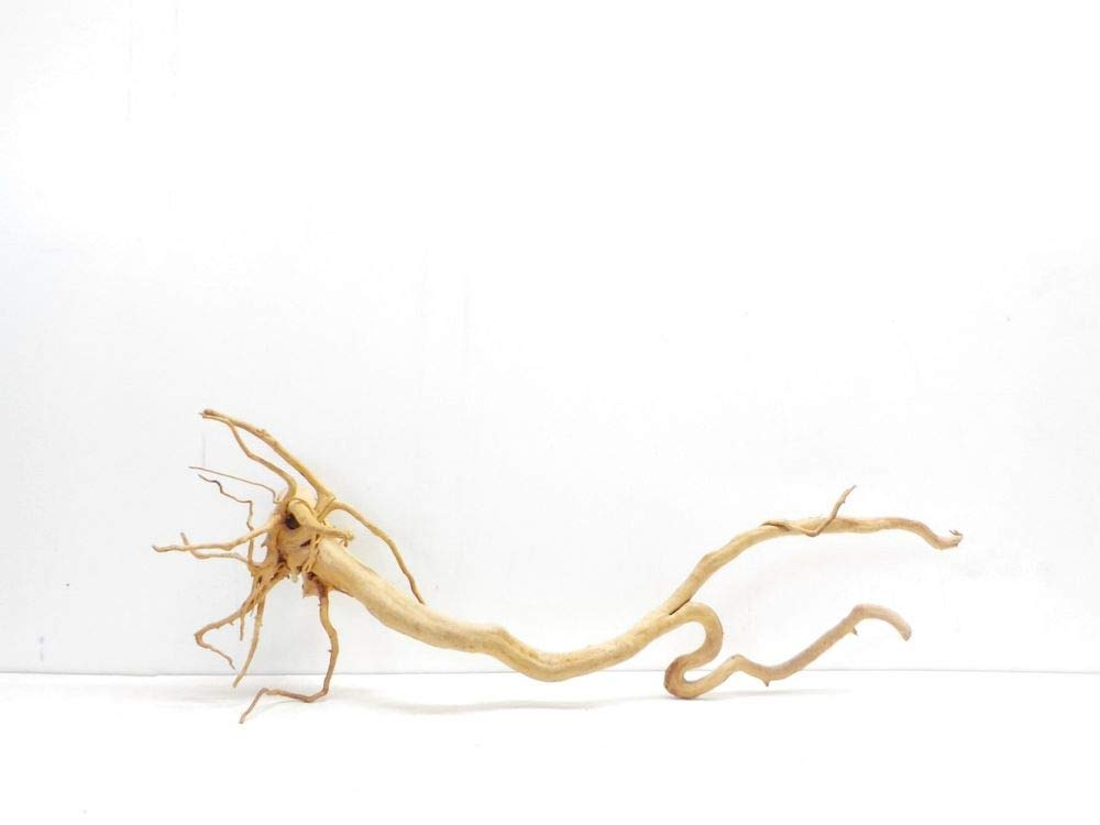 AQUARISTIKWELT24 7297 Aquarium Root Dimensions 100 x 25 x 36 cm XXXL