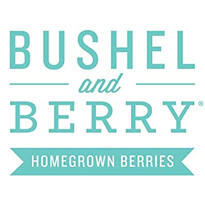 Bushel and Berry 'Southern Bluebelle' Blueberry – 3 Piece – Cottage Hill – Blueberry Plants : Garden & Outdoor