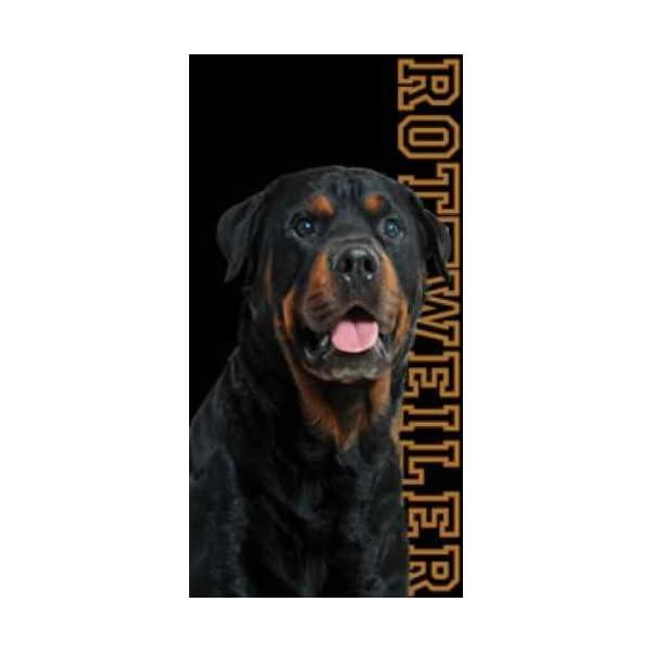 Rottweiler Dog Beach Towel 1