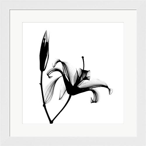 Lily + Bud X-Ray by Bert Myers Framed Art Print Wall Picture, White Flat Frame, 20 x 20 inches ()