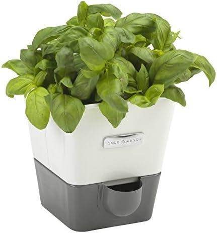 Cole Mason Self Watering Indoor Herb Garden Planter By Cole
