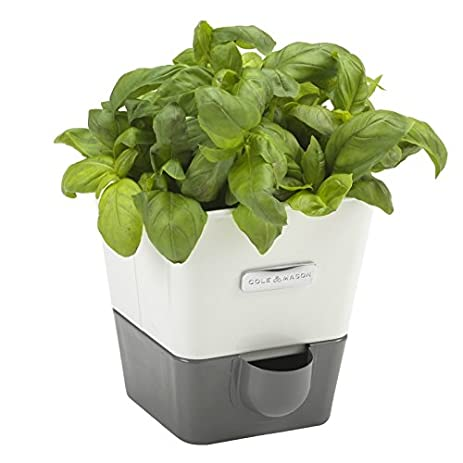 Amazon.com: COLE & MASON Self-Watering Indoor Herb Garden Planter ...