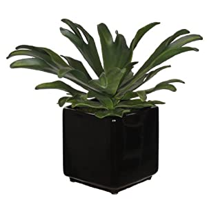 House of Silk Flowers Artificial Staghorn Succulent in Cube Ceramic 66