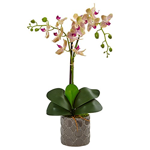Double Phalaenopsis Silk Orchid - Nearly Natural Double Phalaenopsis Silk Orchid in Planter, Cream