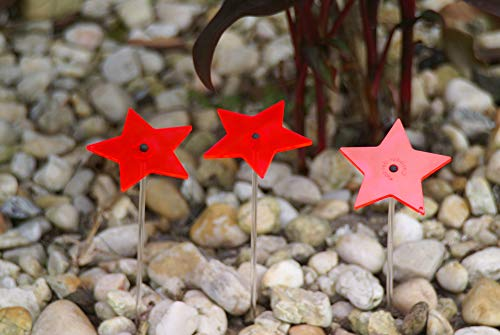 INTERNET SALES-USA CAZADOR 3 Pack Star Bouquet - RED