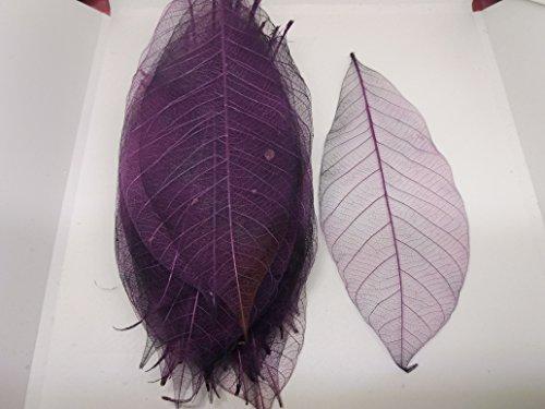 200x Purple Natural Skeleton Leaves Rubber Tree Scrapbook Craft Wedding Decor (Tree Christmas Hobbycraft Decorations)