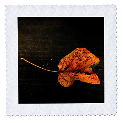 3dRose Stamp City - nature - Close up photograph of a single autumn leaf on a boardwalk. - 20x20 inch quilt square (qs_309932_8)