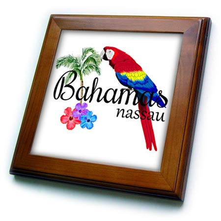 3dRose Macdonald Creative Studios - Islands - Bahamas Nassau Caribbean Souvenir with Tropical Parrot and Flowers. - 8x8 Framed Tile (ft_299249_1)