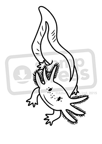 A7 'Axolotl' Unmounted Rubber Craft Stamp (SP000430)