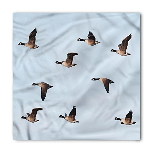 Geese Bandana by Lunarable, Canada Goose (Branta Canadensis) in Flight Clear Sky Traveling Feather Picture, Printed Unisex Bandana Head and Neck Tie Scarf Headband, 22 X 22 Inches, Pale Blue - Canada Ban