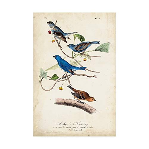 Indigo Bunting Bird - Trademark Fine Art Indigo Bunting Birds by John James Audubon, 12x19
