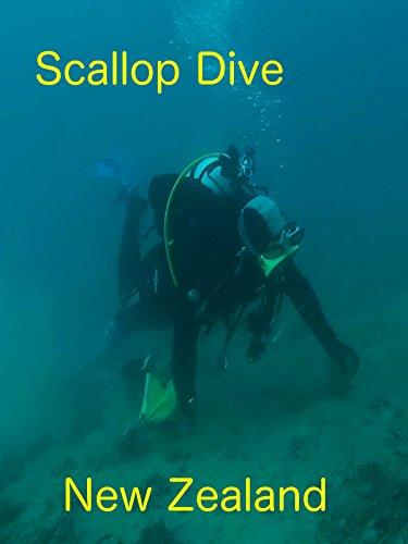 Scallop  Dive New Zealand