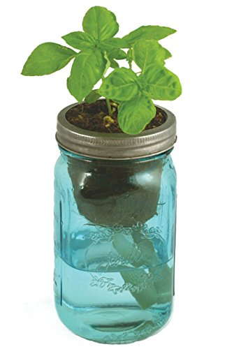Modern Sprout Garden Jar Basil in the UAE See prices reviews
