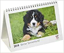 berner sennenhund 2019 timokrates tischkalender. Black Bedroom Furniture Sets. Home Design Ideas