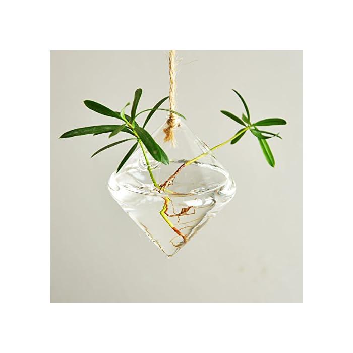 Ivolador-Terrarium-Container-Flower