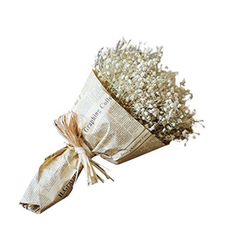 Dried Flower,Han Shi Modern Natural Gypsophila Home Decor Sky Star Babys Breath Gift (L, A)