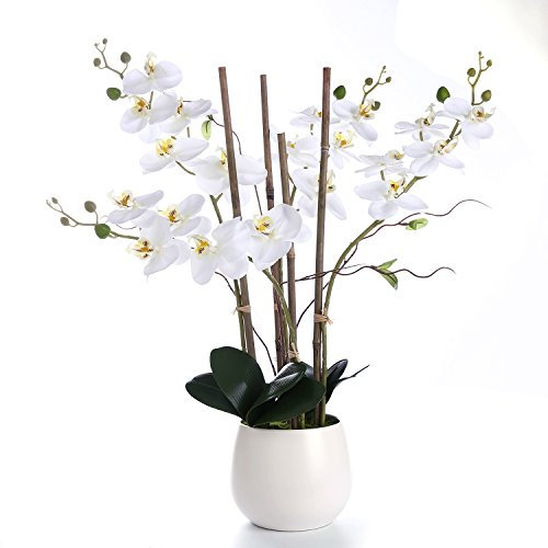 LIVILAN Large White Silk Orchid Artificial Flower Arrangements with Vase, Realistic Real Touch, Centerpiece Decoration & Gift Choice (White)