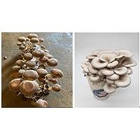 Combo Mushroom Kits(1 Organic Shiitake Mushroom kit + 1 Oyster Mushroom Growing Kit) Harvest Gourmet Mushrooms in 10…