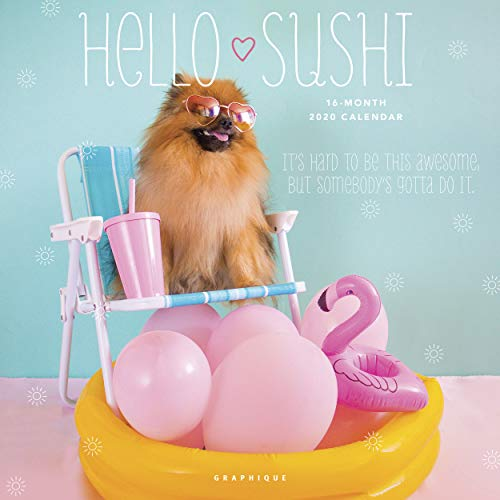 Graphique Hello Sushi Wall Calendar - 16-Month, 2020 Calendar, 12 x 12 - Features Cute Photos of Sushi The Pomeranian, Written in English, French, and Spanish, Cute Gift Idea for Dog Lovers