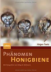Phänomen Honigbiene