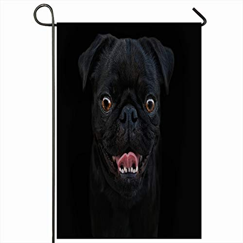 Ahawoso Seasonal Garden Flag 12x18 Inches Little Breed Black Dog On Dark Pug Eyes Look Mammalia Mammals Design Coat Home Decorative Outdoor Double Sided House Yard Sign