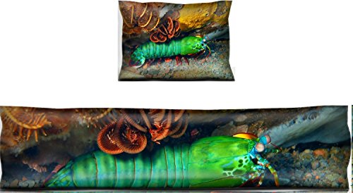 Luxlady Mouse Wrist Rest and Keyboard Pad Set, 2pc Wrist Support IMAGE ID: 34031412 Mantis shrimp Island Bali Tulamben