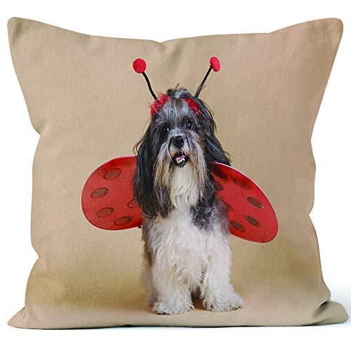Nine City Cute Dog Wearing Ladybird Costume Home
