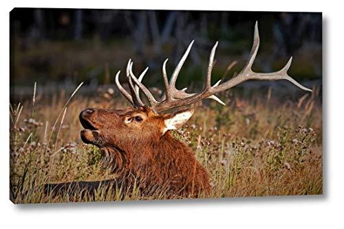 (Bull Elk by John Stalowy - 18